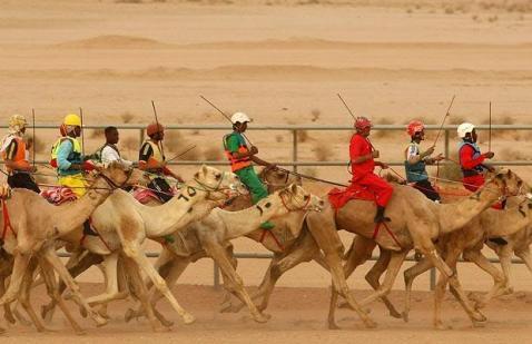 camel-racing